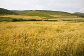 内蒙,坝上,乌兰木统,乌兰木统草原,红山,军马场,草原,草地,